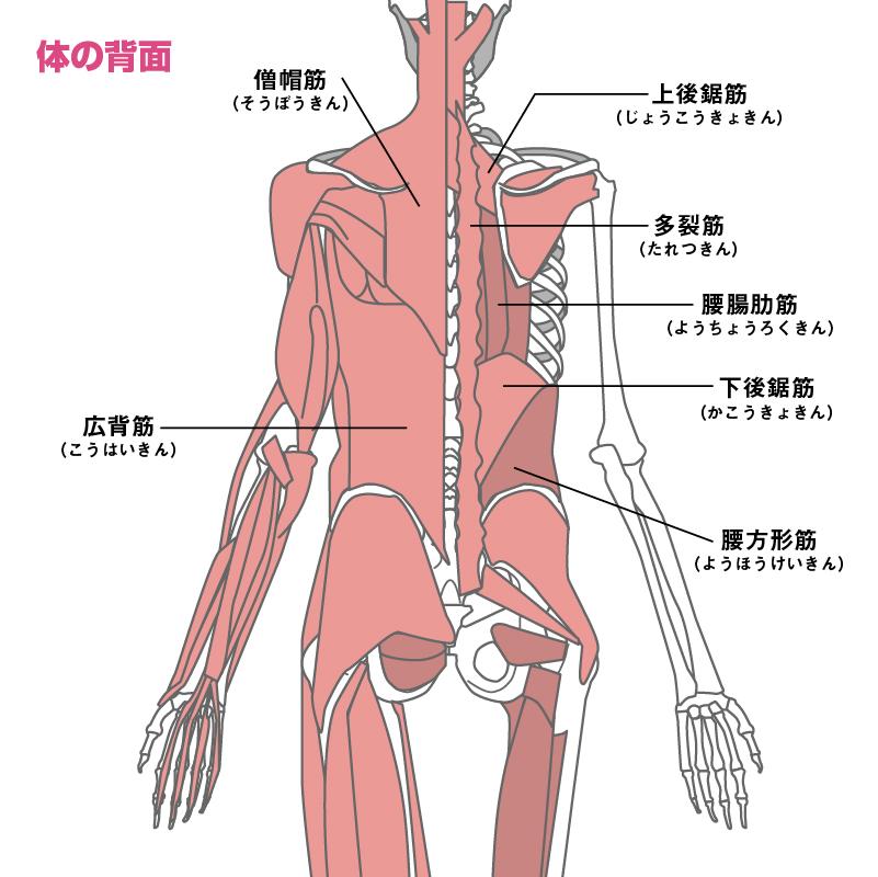 Cintura alrededor del frente del cuerpo